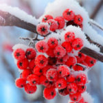 kvetiny-anna-design-zima