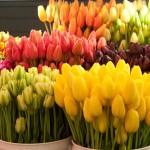 rezane kvetiny vamberk