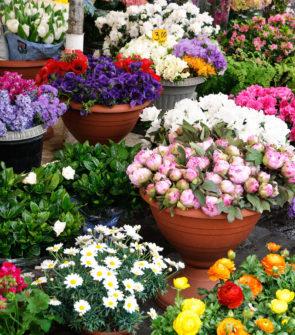hrnkove kvetiny vamberk