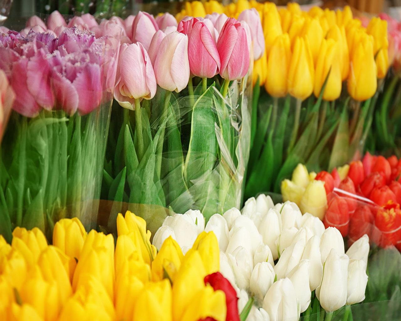 rezane kvetiny vamberk_uvod